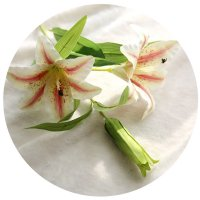 HD089 - Lilly Flowers